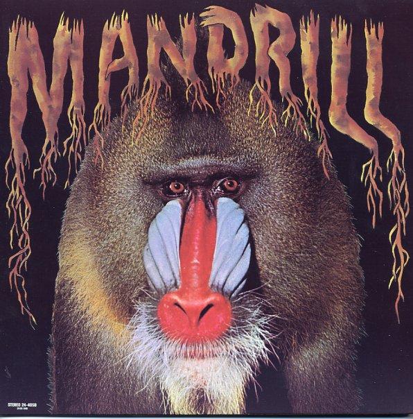 A rodar XLI - Página 3 Mandrill~~~_mandrill~_101b